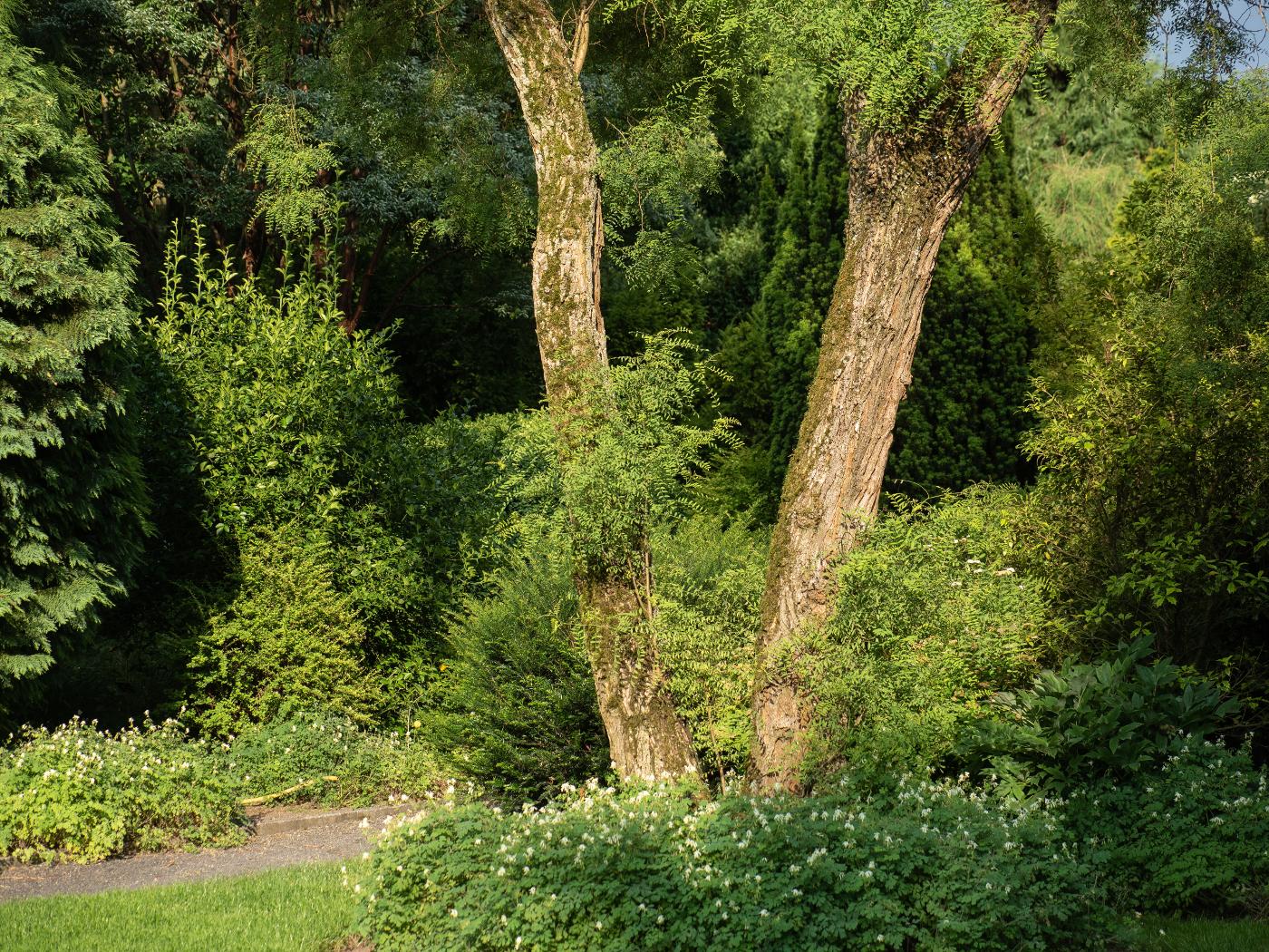 Arboretum Park Härle #3 |  © wolfgang röser