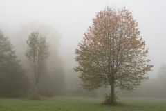 Nebel in der Siegaue 01 | © wolfgang röser | worobo
