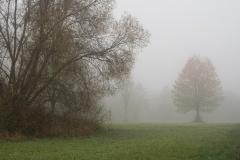 Nebel in der Siegaue 02 | © wolfgang röser | worobo