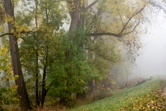 Nebel in der Siegaue 03 | © wolfgang röser | worobo