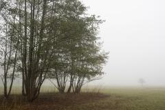Nebel in der Siegaue 05 | © wolfgang röser | worobo