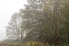 Nebel in der Siegaue 06 | © wolfgang röser | worobo