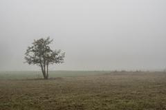 Nebel in der Siegaue 07 | © wolfgang röser | worobo