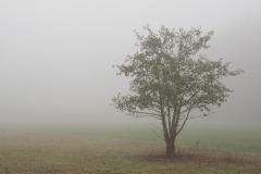 Nebel in der Siegaue 08 | © wolfgang röser | worobo
