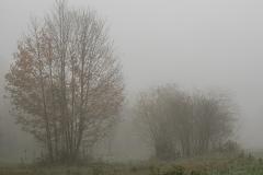 Nebel in der Siegaue 09 | © wolfgang röser | worobo