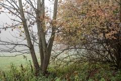 Nebel in der Siegaue 10 | © wolfgang röser | worobo