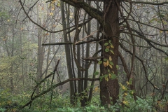 Nebel in der Siegaue 11 | © wolfgang röser | worobo