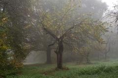 Nebel in der Siegaue 12 | © wolfgang röser | worobo