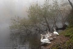 Nebel in der Siegaue 14 | © wolfgang röser | worobo